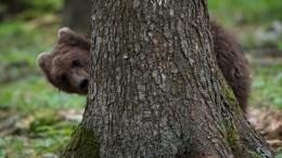 Тамбовские медведи ради еды полезли надеревья