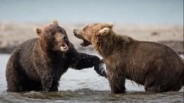 ВТамбове подеревьям карабкаются медведи— видео
