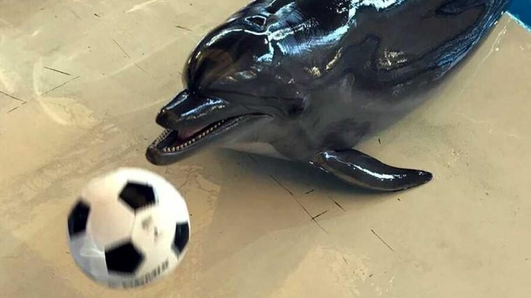 Дельфин-оракул Ванда предсказала исход матча Россия— Испания