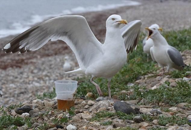 Пьяные чайки