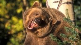Охотник вКанаде переквалифицировался врыбака после встречи смедведем— видео