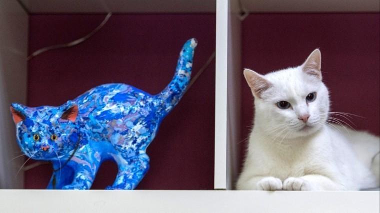 Кот-предсказатель изЭрмитажа покличке Ахилл обрел новый дом