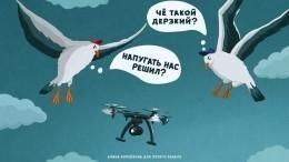«Анубрысь!»— высокотехнологичные беспилотники бросят вызов неразумным птицам