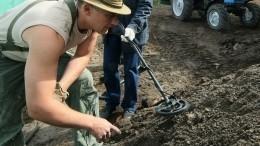 ВЯкутии наострове Котельный нашли уникальные останки маленького мамонта