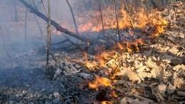 Площадь контролируемых лесных пожаров вРоссии сократилась почти на300 гектаров