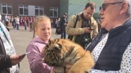 Видео: директор Барнаульского зоопарка пришел голосовать сдвумя тигрятами