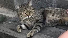 Блудный кот: вКрасноярске животное вернулось домой спустя семь лет скитаний