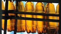 Древние люди научились земледелию ради пива