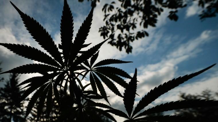 Грузия подсчитала возможный доход отэкспорта марихуаны