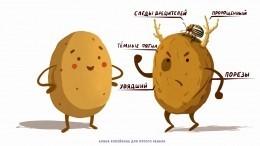Картошка-красавица— Роскачество объяснило, как опознать качественный корнеплод