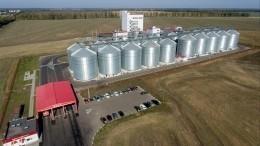 Российская пшеница угрожает американским фермерам— утверждает WSJ