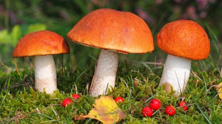 погода для роста грибов в лесу