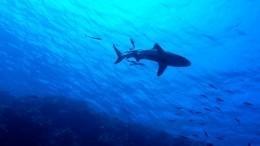 Выбросившаяся наберег ради туши кита акула попала навидео