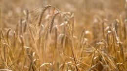 Россия начнет продавать зерно набирже вближайшее время