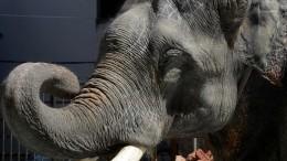 Видео: Слоны сбежали изцирка вКемерово ипугают горожан