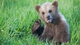 Наокраине Уфы обосновался любопытный медвежонок