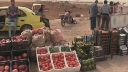 Наюге Сирии вразгаре сезон сбора урожая