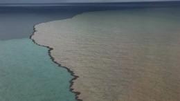 Черное море становится действительно черным— фото