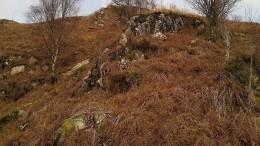 «Найди оленя»— Пользователей сети поставил втупик снимок натуралиста