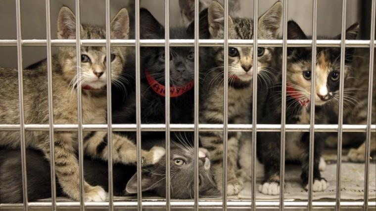 Девушка пожертвовала приюту 340 тысяч рублей для спасения котенка