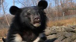 Видео: ВПриморье зоозащитники вызволили несчастного медвежонка изтесной клетки