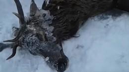 Видео: ВБурятии спасли провалившегося под лед оленя