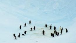Журналисты ВВС спасли пингвинов отверной гибели— видео