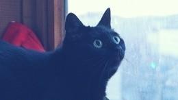 Кот нановоселье. Как заработать напушистом домоседе