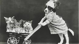 Фотоподоборка: смешные снимки котят инетолько начала XX века