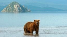 Путин рассказал освоих впечатлениях отколичества медведей наКамчатке— видео