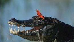 Реакция уронившего свой смартфон вяму скрокодилами туриста развеселила сеть