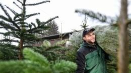 ВМоскве начинается торговля новогодними елками