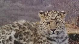 Приморские леопарды сделали несколько «селфи»