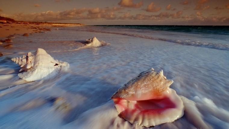 Морское чудище выплыло изпучины назападе Австралии— фото