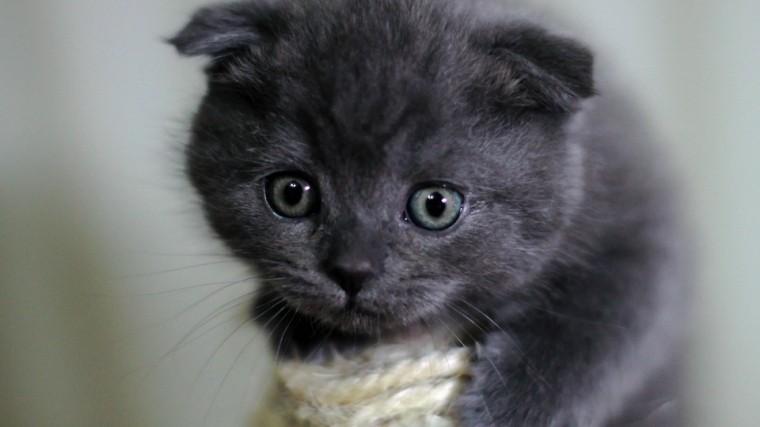 ВКитае ждут появления насвет первого клонированного котенка