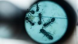 Сотрудники университета вСША обвинили муравьев вобразовании парниковых газов