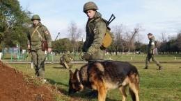 ВАбхазии прошли тактико-специальные учения сучастием минно-розыскных собак