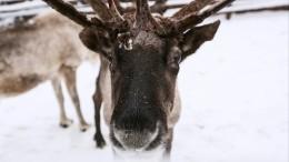 «Авам слабо?»: 101-летняя охотница убила двух оленей одним выстрелом