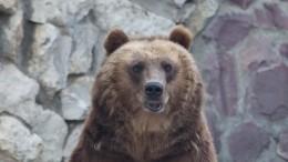 Убийственные полномочия: Зимняя охота чиновников наспящих вберлогах медведей