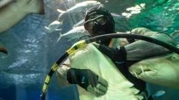 «Мне бывает страшно слюдьми»— дрессировщик акул оработе ижизни