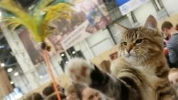 Ученые обнаружили, что кошки опасны для психического здоровья человека