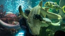 «Танец схищниками»— один рабочий день дрессировщика акул