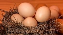Лайфхак: Как проверить качество залежавшихся вхолодильнике куриных яиц