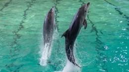 Кто обучает белух идельфинов— большая тренировка вПетербургском дельфинарии