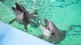 Как общаются дельфин ичеловек— рассказывают вПетербургском дельфинарии