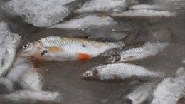 Следователи проверяют информацию озагрязнении реки вСмоленской области