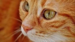 1марта— День кошек вРоссии