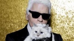 Достанутсяли миллионы империи Лагерфельда его кошке попрозвищу «Капусточка»?