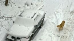 Ураганный ветер оставил без света горные села Дагестана