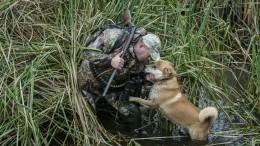 Охотника изГермании подстрелила собственная собака итот лишился лицензии